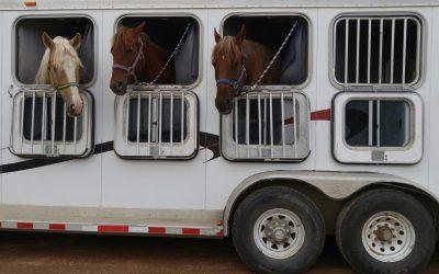 Horsicar : location de transport équestre